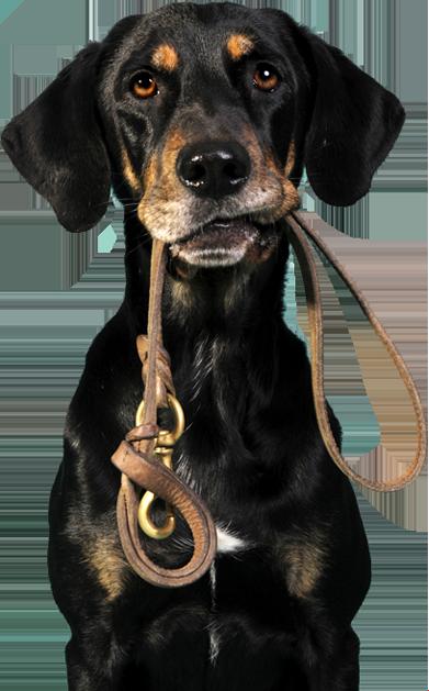 association donne chien